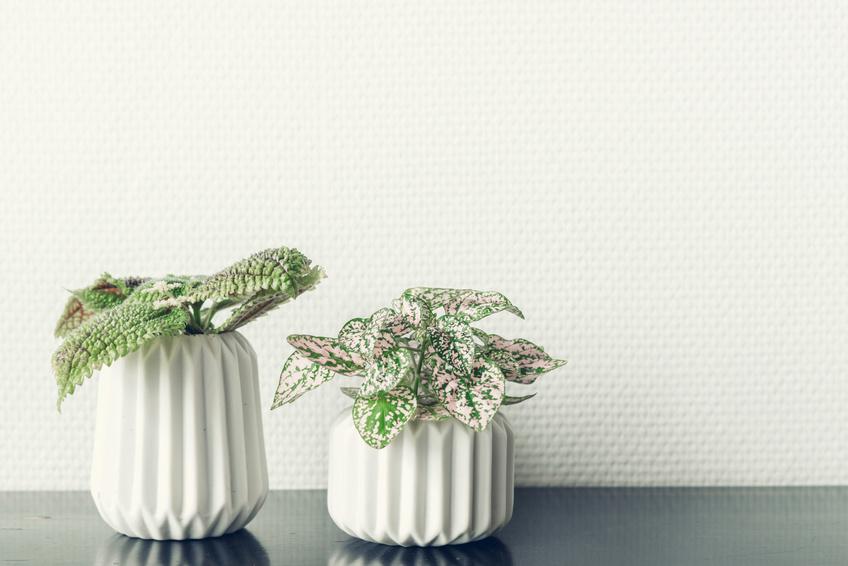 Grünpflanzen Dekoration im Wohnzimmer