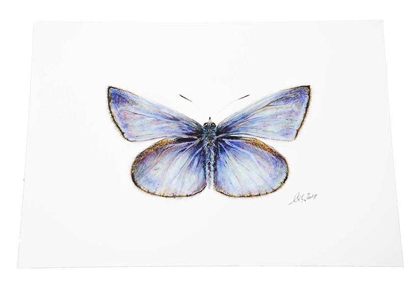 A4 Kunstdruck Wandbild Schmetterling Bläuling