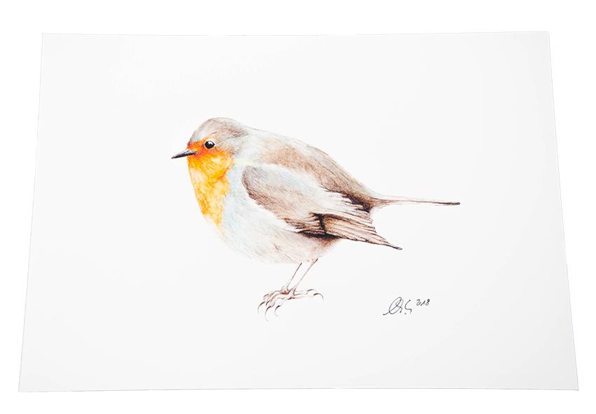 A4 Kunstdruck Wandbild Vogel Rotkehlchen