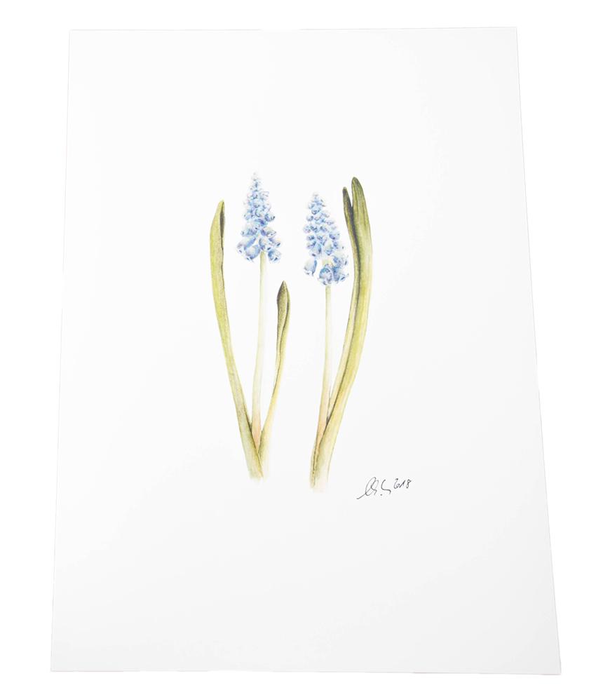 A4 Kunstdruck Wandbild Blüte Traubenhyazinthe