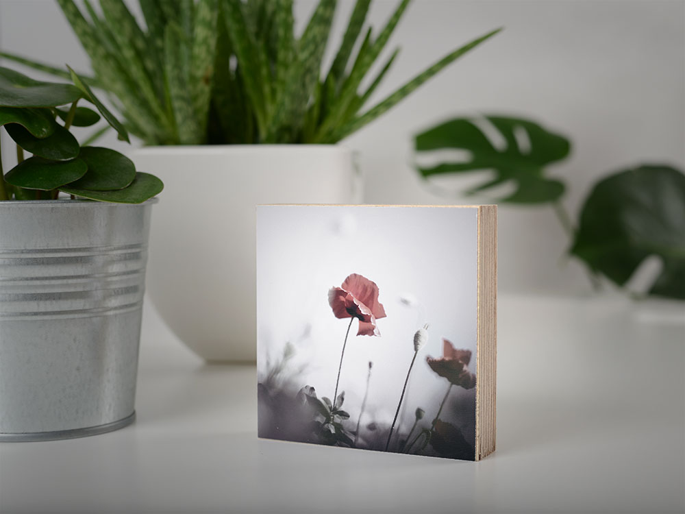 Kunstdruck Print auf Holz Klatschmohn