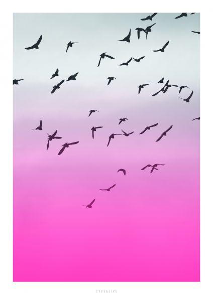A3-Print - Birds
