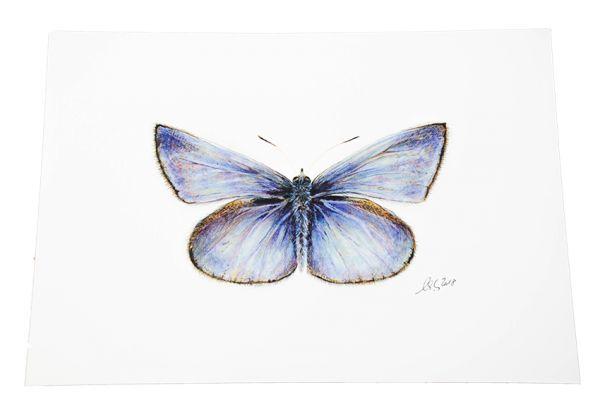 A4-Print Schmetterling
